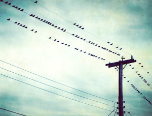 birds-on-wire-photography-teal-print-blue-green